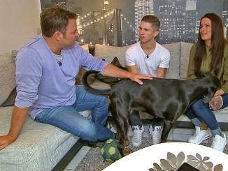 """""""Der V.I.P. Hundeprofi"""" mit Joey Heindle, Anna-Maria Zimmermann und Mario Galla - TV News"""