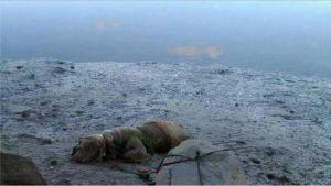 perro-ahogado-playa-lqs