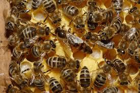 abejas-loquesomos