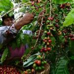 El turismo y el despojo histórico de la tierra en El Salvador