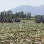 Honduras: los melones del terror