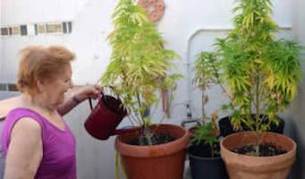 El cannabis rejuvenece el cerebro de los mayores