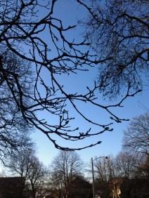 magnolia branch 1