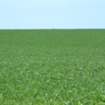 northern-illinois-dixon-selling-131-tillable-acres