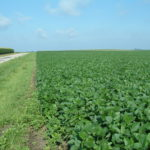 Christian County IL 90 Acre Farmland Listing Photo 2