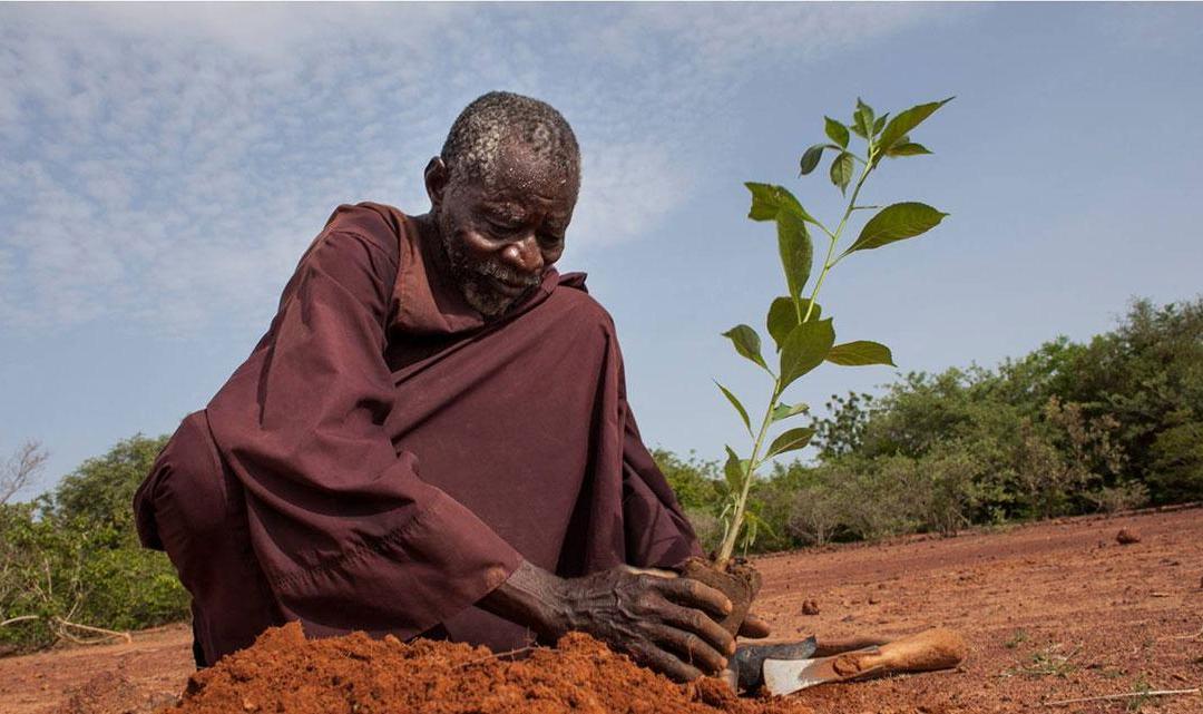 …Yacouba Sawadogo, l'homme qui a arrêté le désert …
