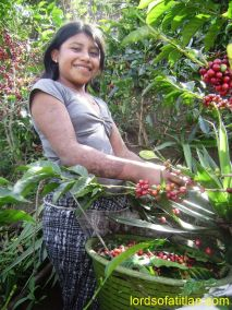 Eugenia picking coffee, finca Pamojilá