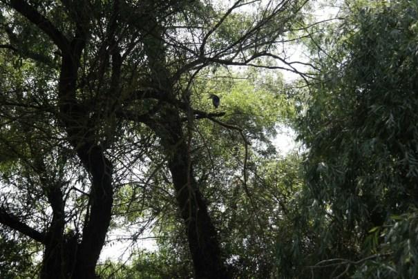 Pasari in copac, Delta Dunarii