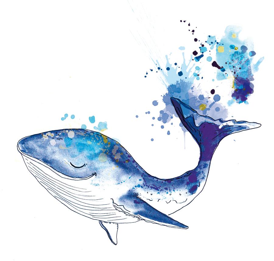 baleine bleue - illustrations sur mesure