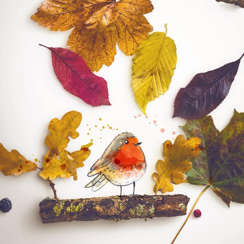 montage photo illustration rouge gorge sur sa branche