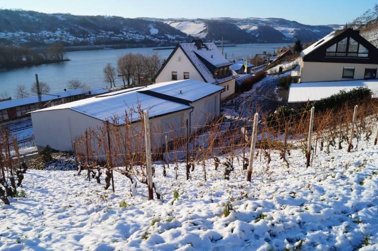 Weingut Wurm - vinter