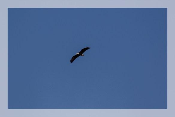 FlyOvr
