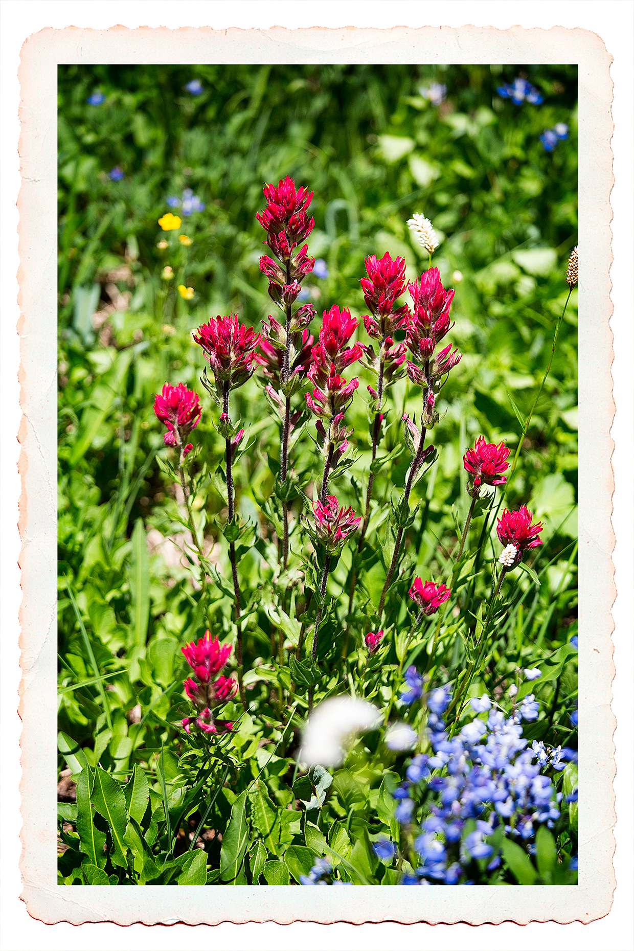 ... Is A Garden Filled Knee Deep With Fresh, Lovely Flowers Of Every Hue,  The Most Luxuriant And The Most Extravagantly Beautiful Of All The Alpine  Gardens ...