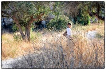 Estate in Sicilia, nei campi