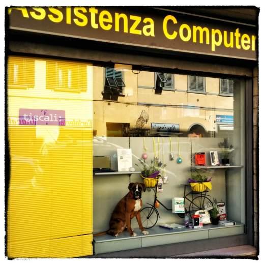 Assistenza Computer con cane