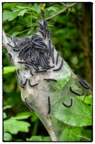 Bruchi su ragnatele e foglie