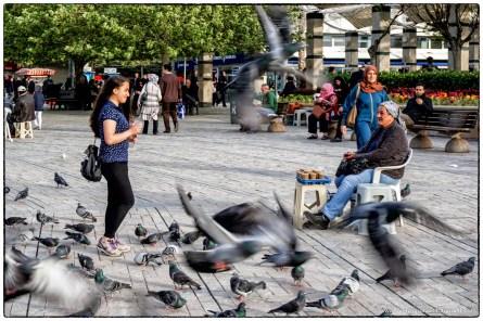 Izmir, Piccioni in strada