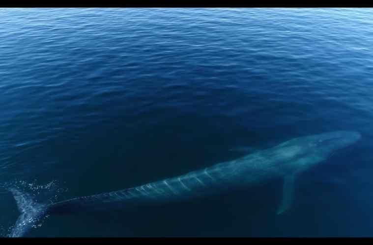 Blue Whale Festival Photographic Exhibition