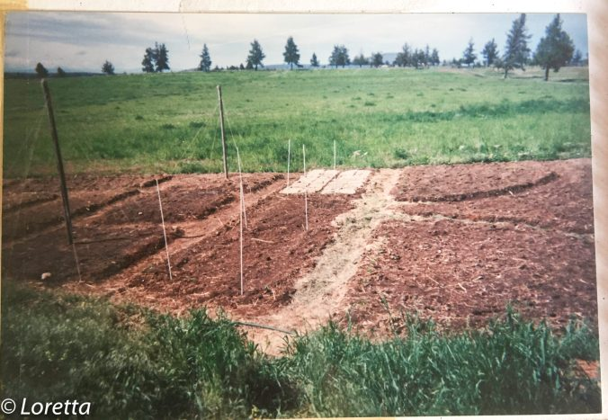 Trying to grow a garden in Central Oregon