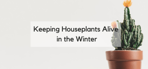 Help, I'm Killing My Houseplants II: Winter Edition