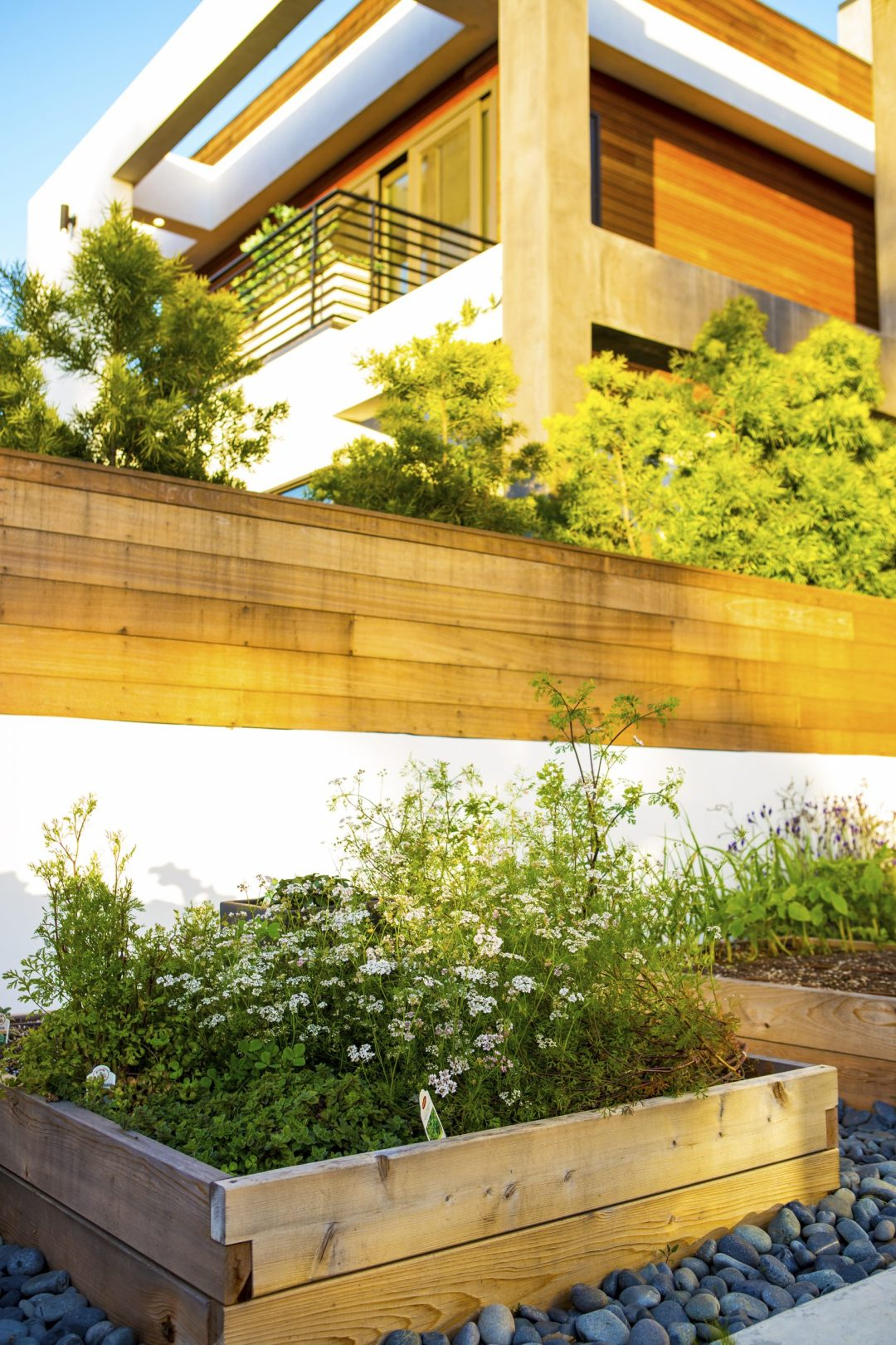How to Design a Modern Vegetable Garden