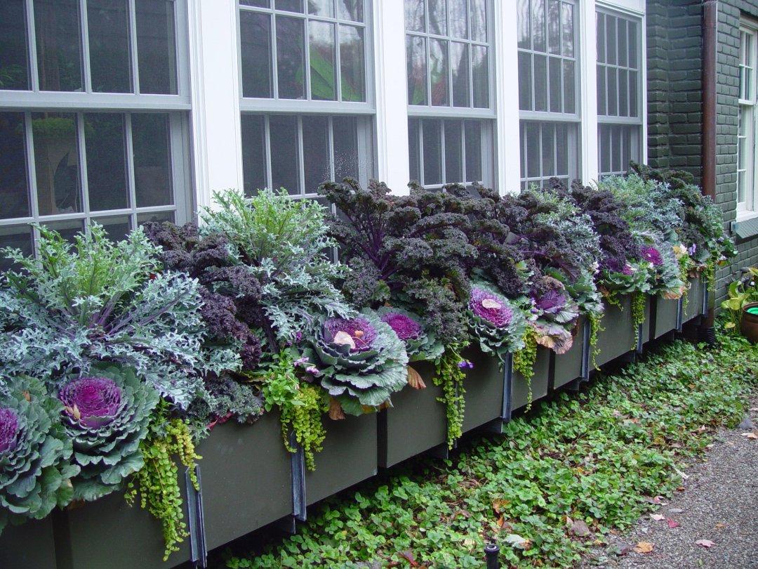 Design a Beautiful Edible Garden
