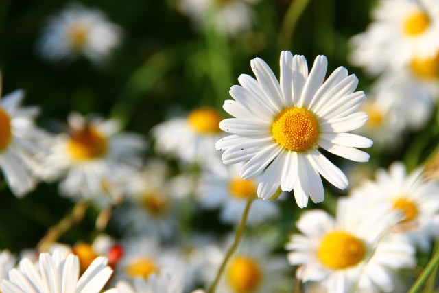 bloom towards towards your highest potential life coaching