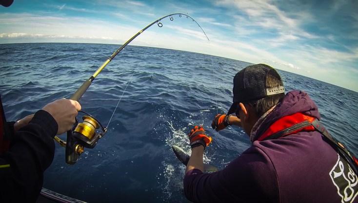 pêche au requin dans le Morbihan