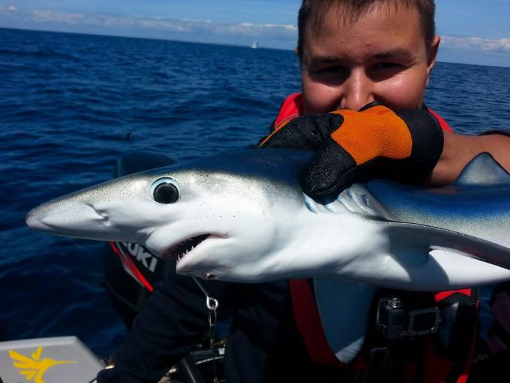 requin peau bleue - lorient passion peche