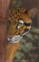 "Paintings by Lori Garfield : Watching, 12"" x 19"" Original Oil Painting of an ocelot looking around the tree it's hiding behind by artist Lori Garfield, Medford Oregon"