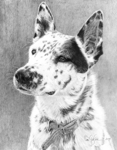 Commission pet portraits : Echo, portrait of a pet dog in graphite. Original Drawing by artist Lori Garfield, Medford Oregon