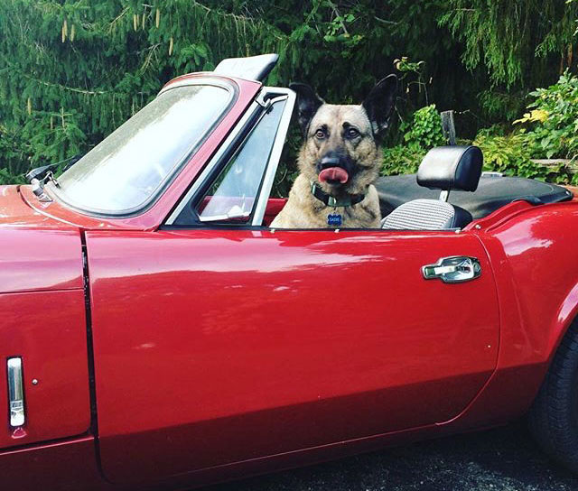 Dog sitting in red convertable. Blog post written by Lori Straus.