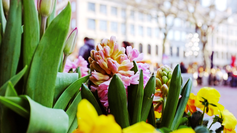 spring flowers in the city 2