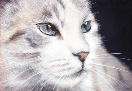 beau-chat