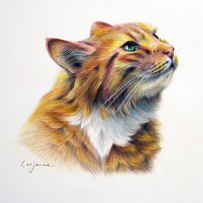 Crayon] Chat roux   Laure Simonin Peintures
