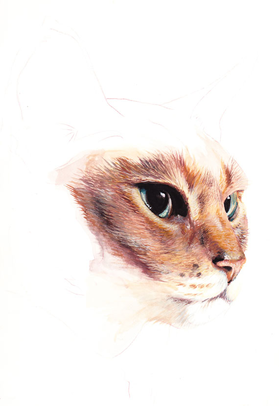 Chat page 6 laure simonin peintures - Mon chat me colle plus que d habitude ...