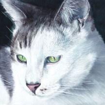 chat_blanc