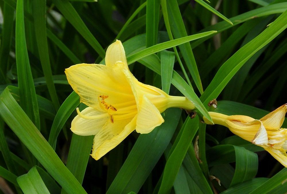 Good Morning Yellow