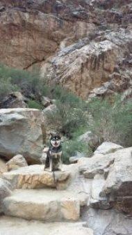 Kuma loves hiking