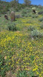 Kuma runs by some wild flowers