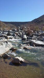 Kuma enjoys taking a dip at Aqua Fria National Monument