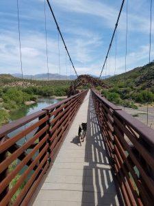Kuma walks across the sheep bridge