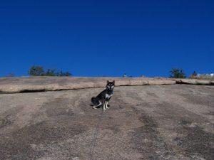 Kuma hikes up Enchanted Rock in Texas