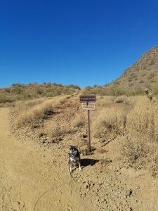 Kuma showing the way