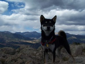 Kuma climbs up Lily Mountain in Northern Colorado