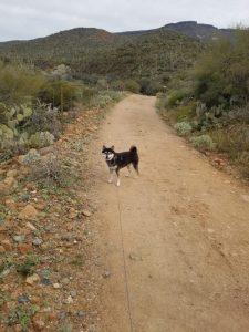 Kuma hiking at Spur Cross Ranch