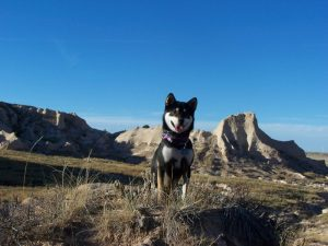 Kuma at Pawnee Butte