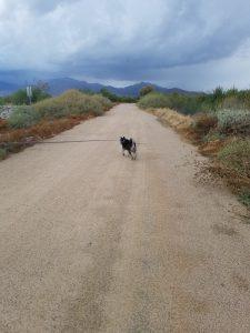 Kuma's birthday hike