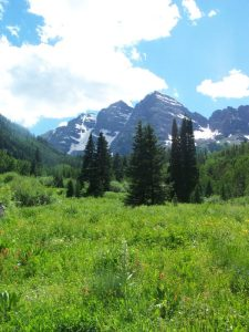 Wild flowers blooming at Maroon Bells