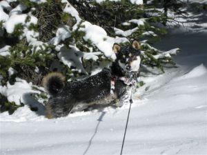 Kuma loves snow